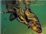 линь подводное фото
