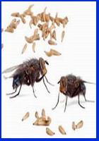 мухи и опарыш
