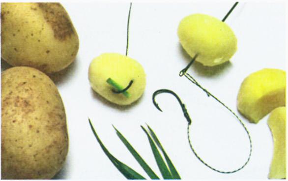 ловим карася на картофель